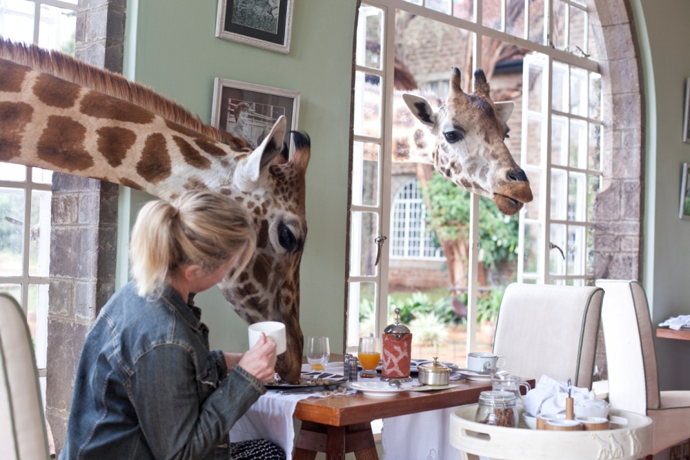 Giraffe Manor Feeding Breakfast 12.jpg