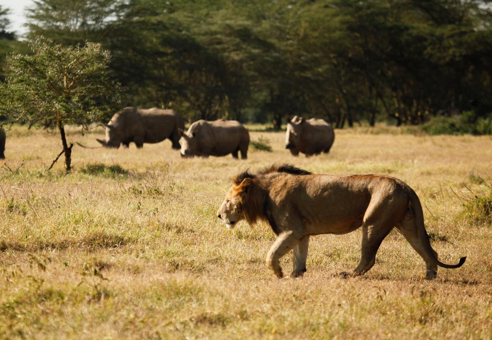 Solio Lodge Wildlife (1).jpg