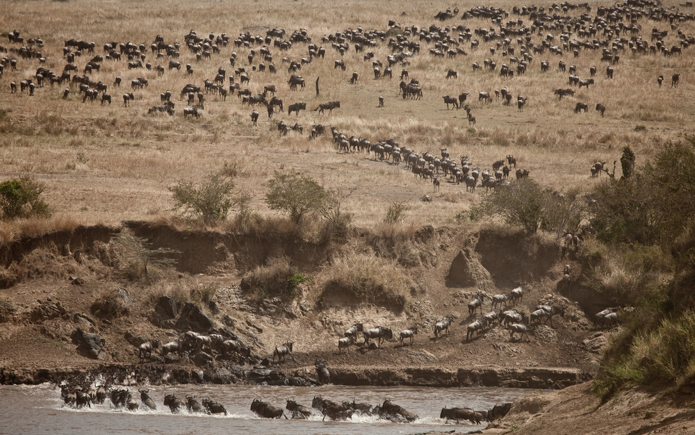 Sala's Camp - wildebeest migration.jpg