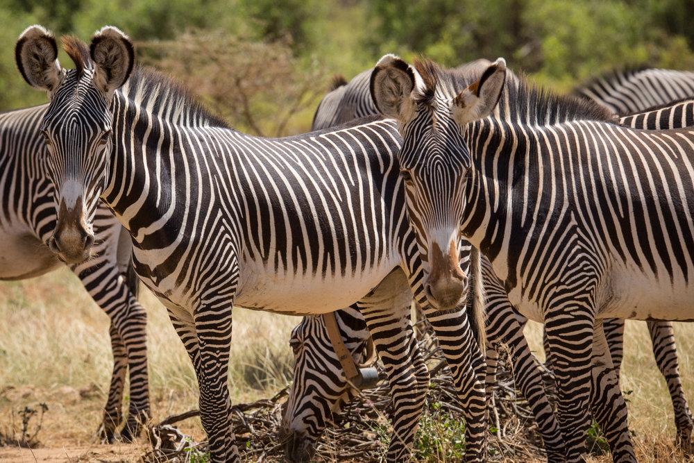 Lyons Family Safari-13.jpg