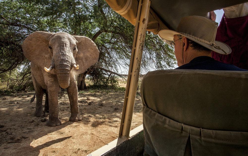 Close-up elephant viewing.jpg