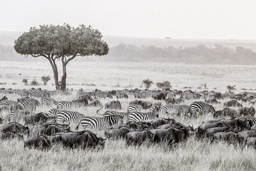 Safari Collection - copyright Scott Ramsay - @love_wild_africa-2283.jpg