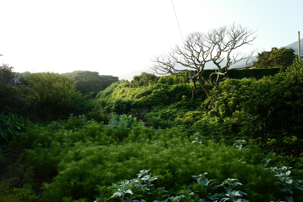 この茂った下にはカニがたくさん。