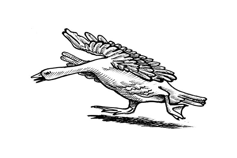 Old Mother Goose illustration