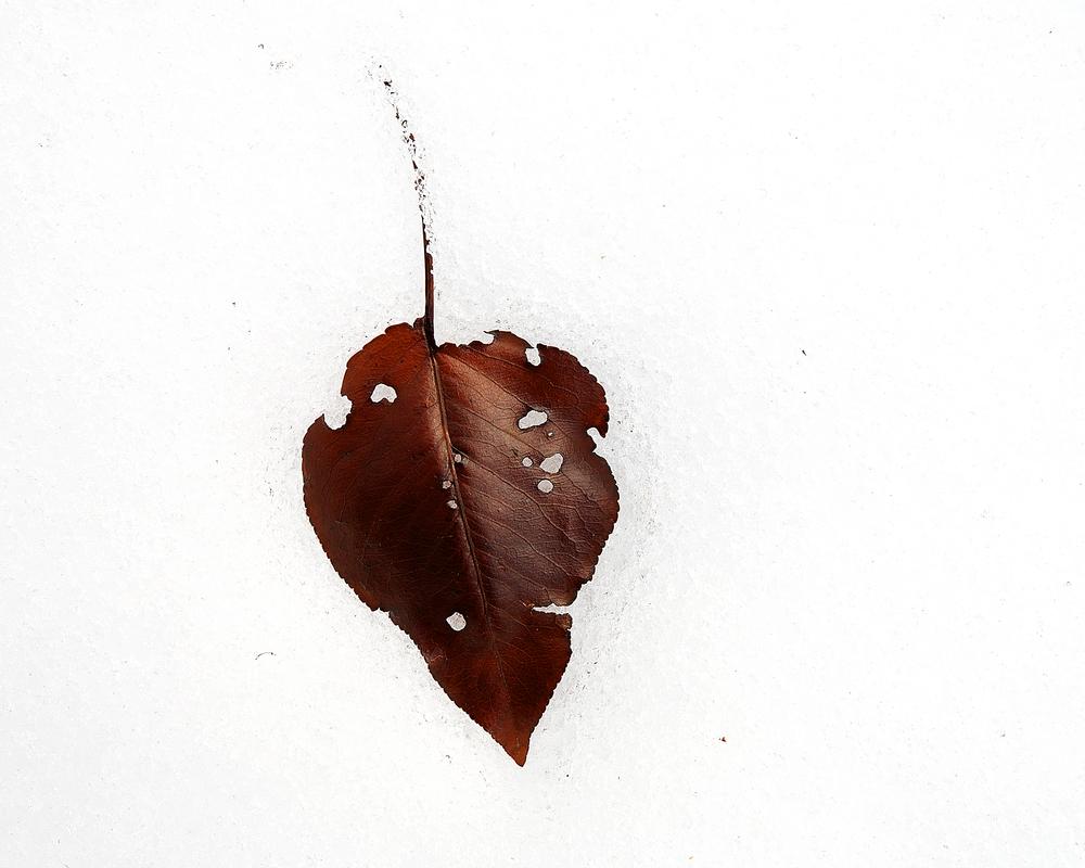 _leavesinsnow_8746.jpg
