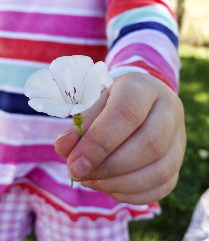 A flower for Mom