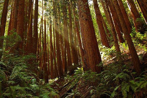 muir-woods-2.jpg