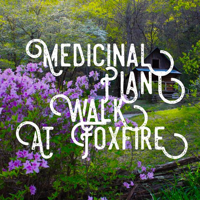 Medicinal Plant Walk.png