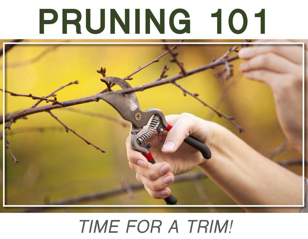 pruning101.jpg