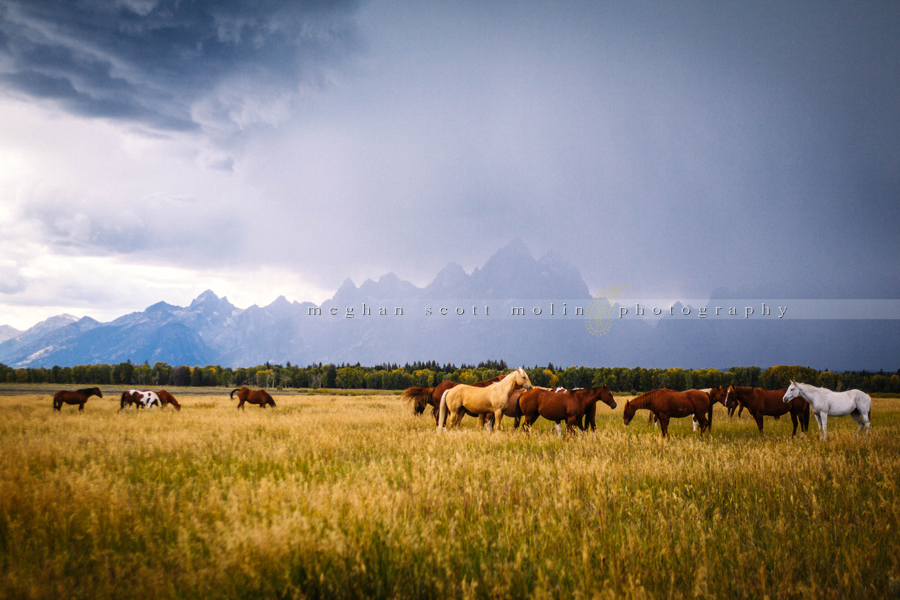 yes, those are the Tetons