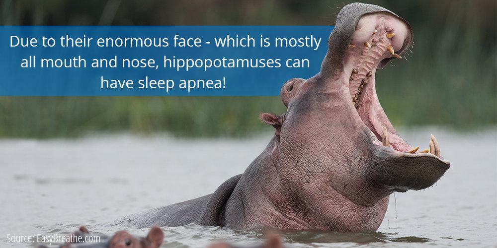 SC - 18 - 1434 - Surprising Sleep Fact.jpg