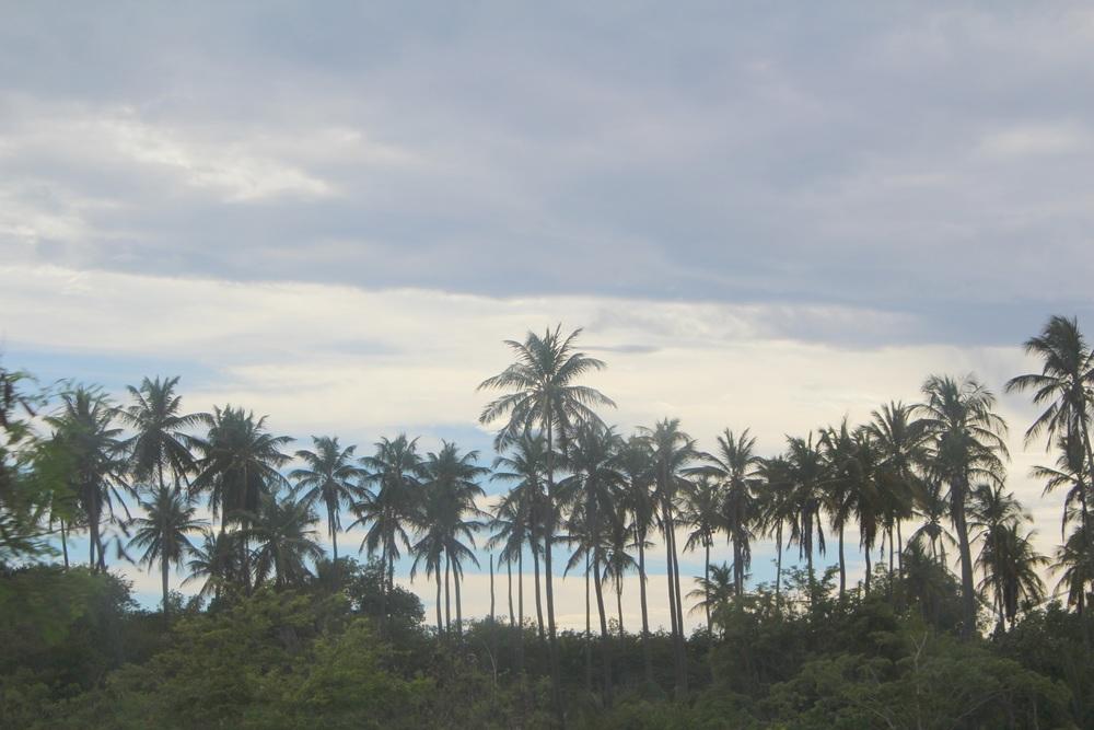 palmas .jpg
