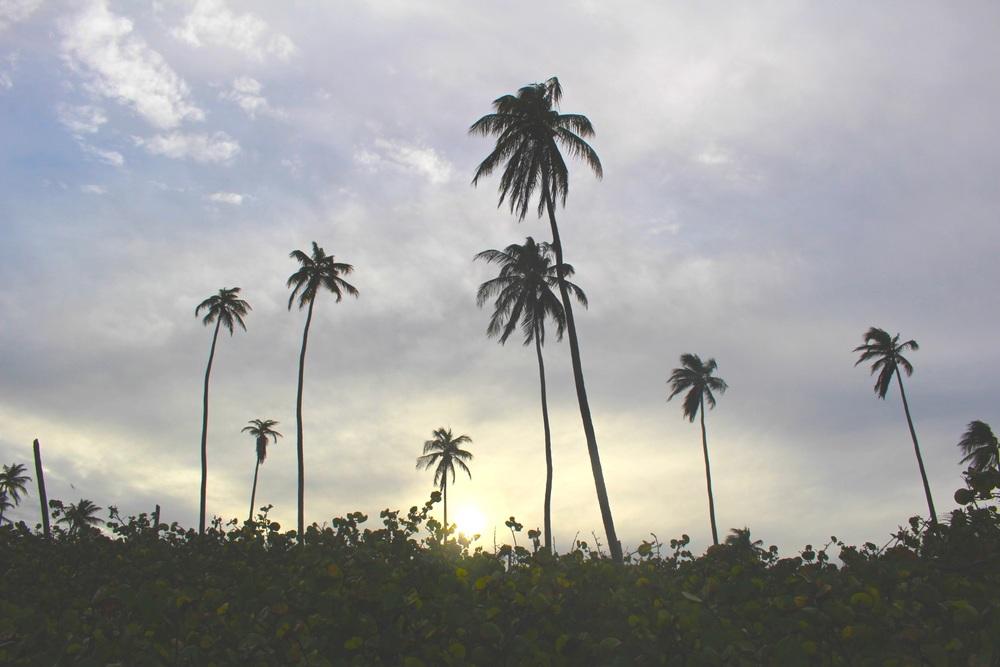 palmas 2.jpg