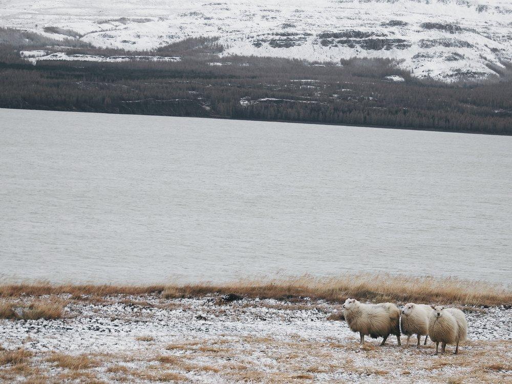 DSCF0866 (ICELAND).jpg
