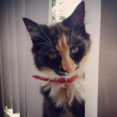 Little Miss Molly