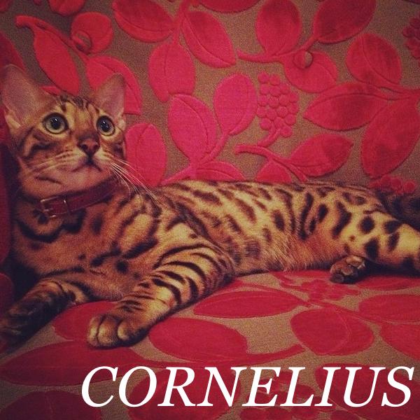 CORNELIUS..jpg