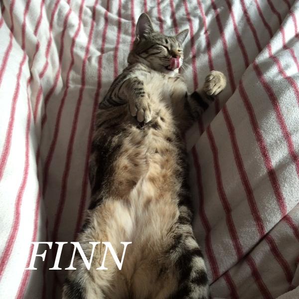 FINN..jpg