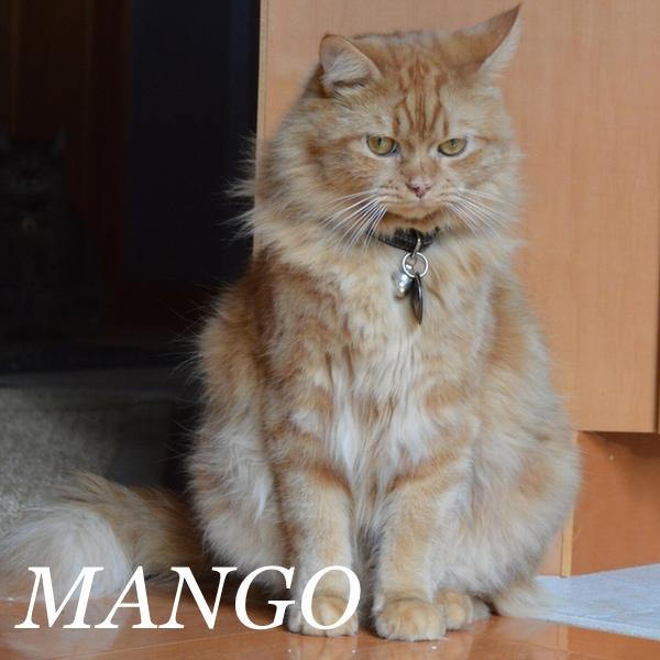 MANGO..jpg