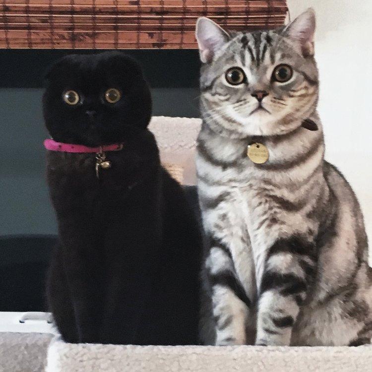 Phoebe & Keenan