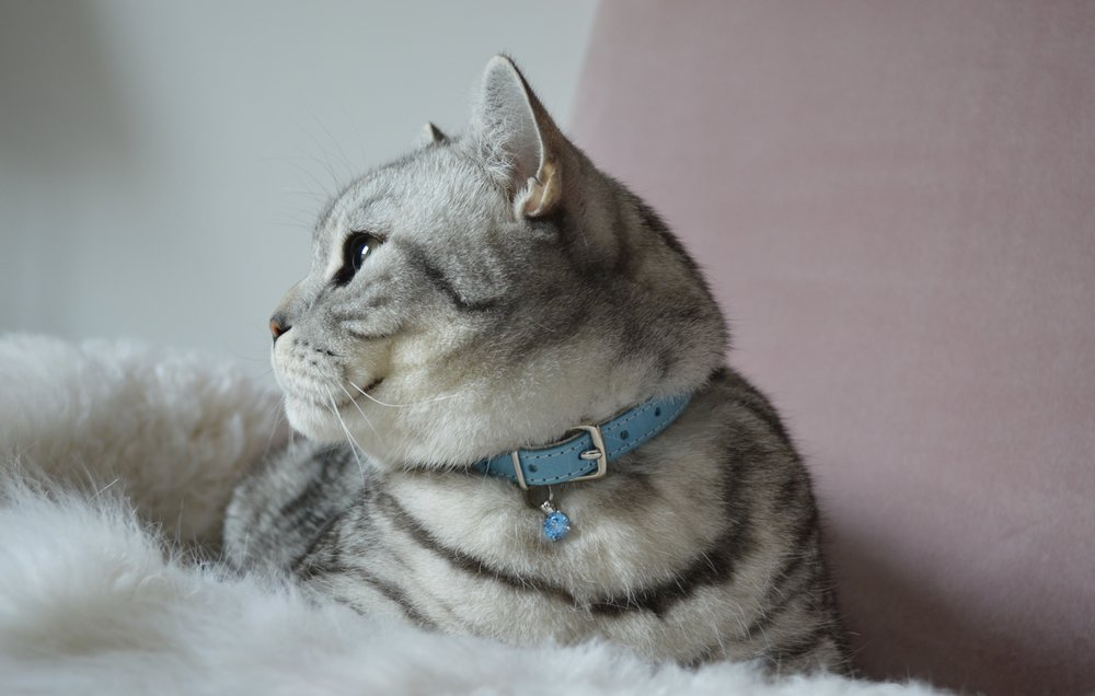 Cheshire & Wain x Choupette's Diary Cat Collar with Blue Gem Charm