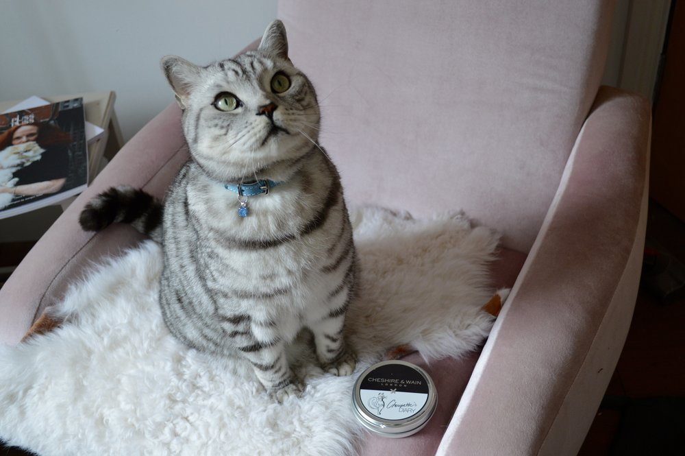 Percy meowdelling his Cheshire & Wain x Choupette's Diary Collar and Blue Gem Charm