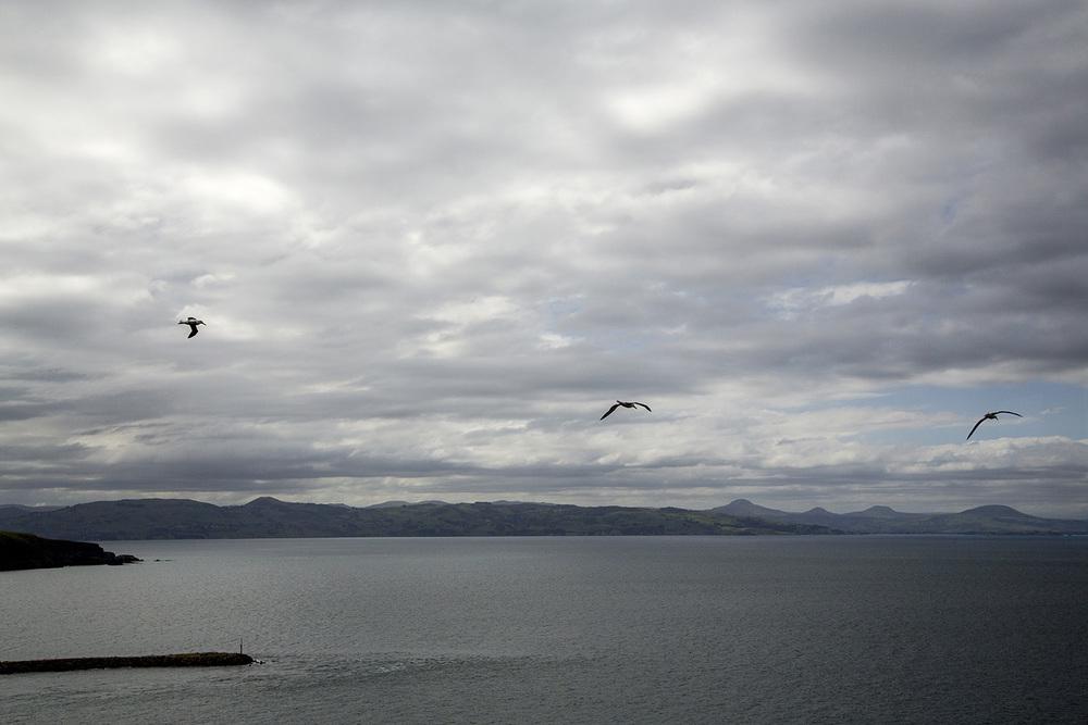 Albatross2.JPG