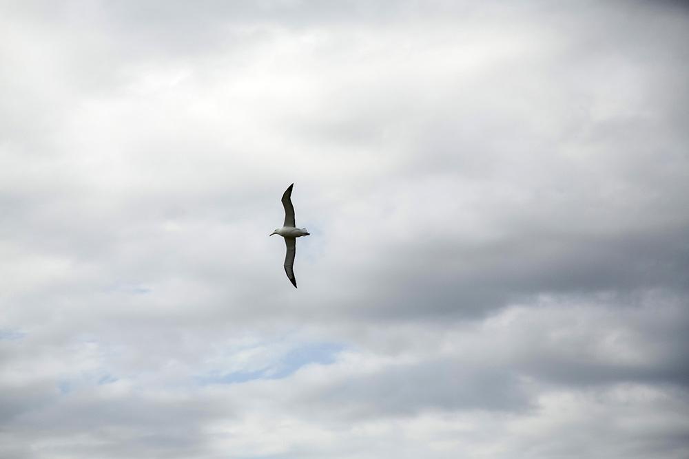 Albatross3.JPG