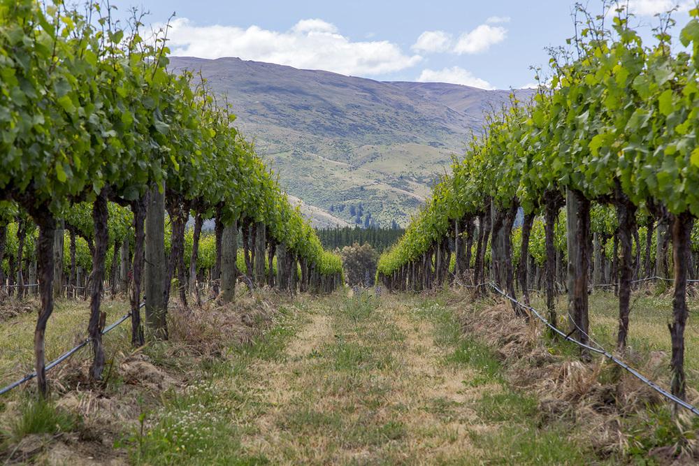 Otago_Wine_10.JPG