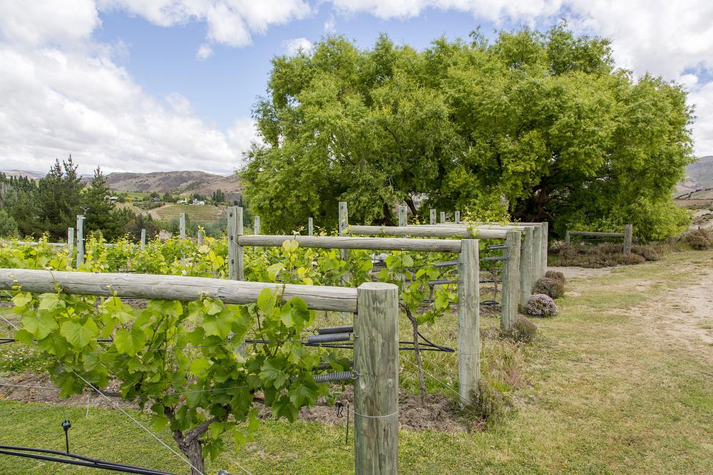 Otago_Wine_12.JPG