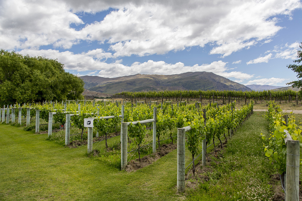 Otago_Wine_6.JPG