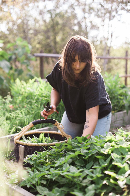 Founder + Maker //  Natassia Bezoplenko-Brazeau harvesting Lemon Balm for Peace Tea