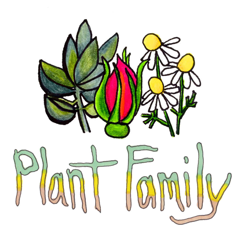 plant-family-12.png