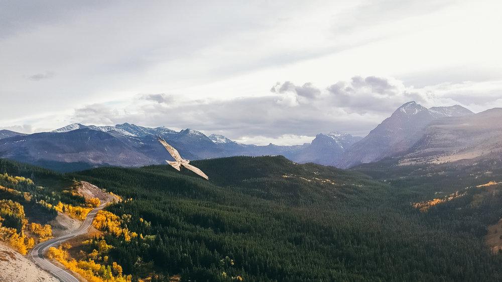Glacier Eagle.jpg