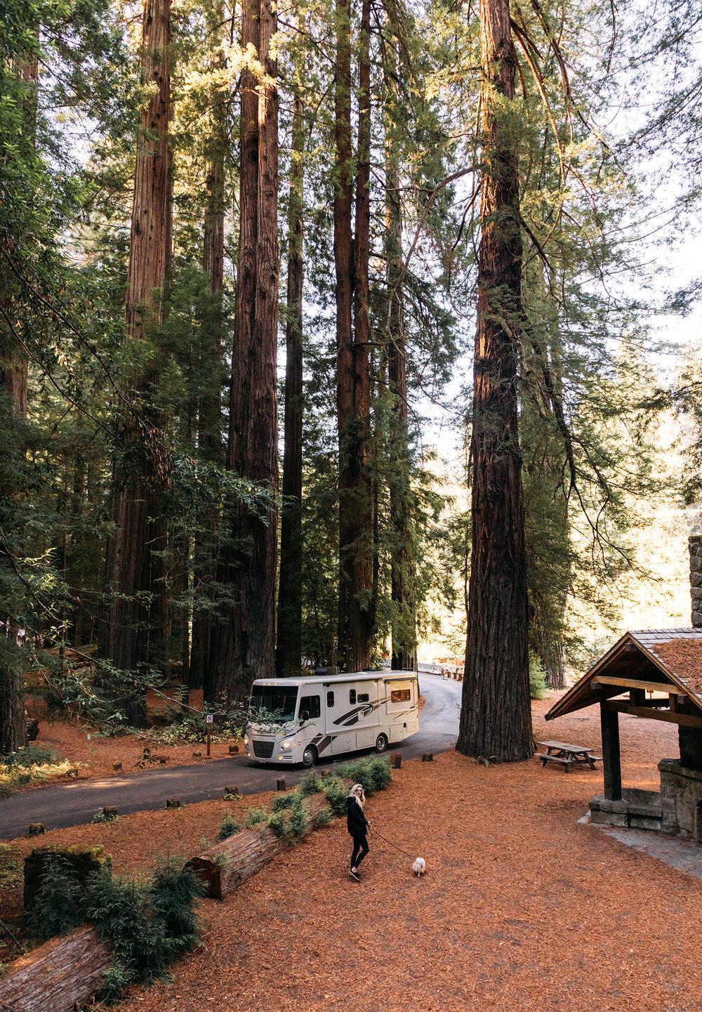 Redwoods 11.jpg