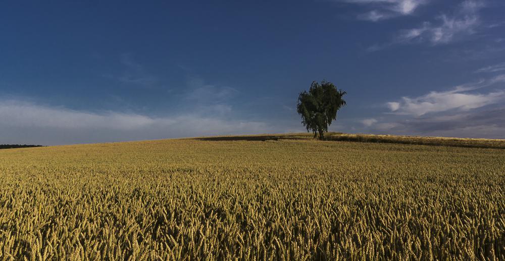 landschaft-1-5.jpg