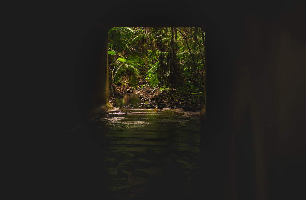 The start of the trail will take you though this tunnel, from here on its all stream and vegetation.