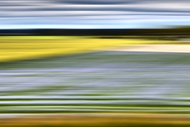 Bonnie Edelman, Lavender Weeds, Sweden, 2014, C-print, 40 x 60 inches, Edition of 10