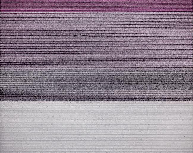 Tulips 07, Noordoostpolder, Netherlands, 2016, Archival pigment print