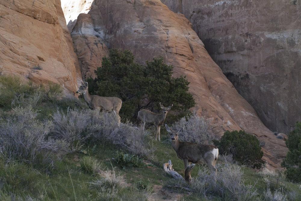 Les Bambis. J'étais à 5m d'elles maximum. Très beau moment.