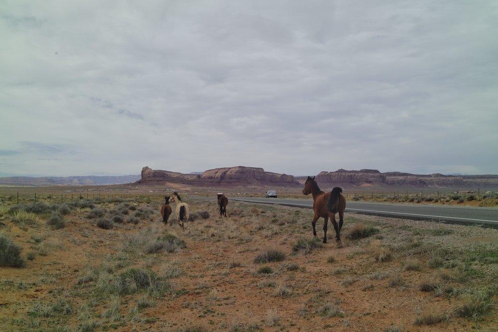 Des chevaux sauvages sur les bords de la route