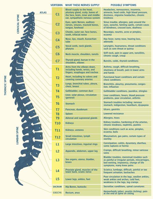 About chiropractic shapiro family chiropractic