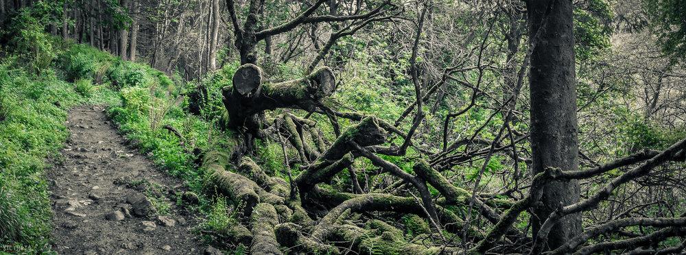 Isle_of_Arran_06_2015_029.jpg