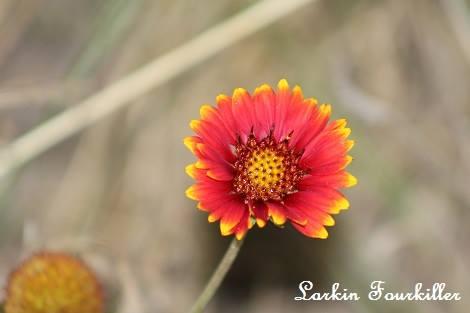 Larkin Fourkiller Nature Photography