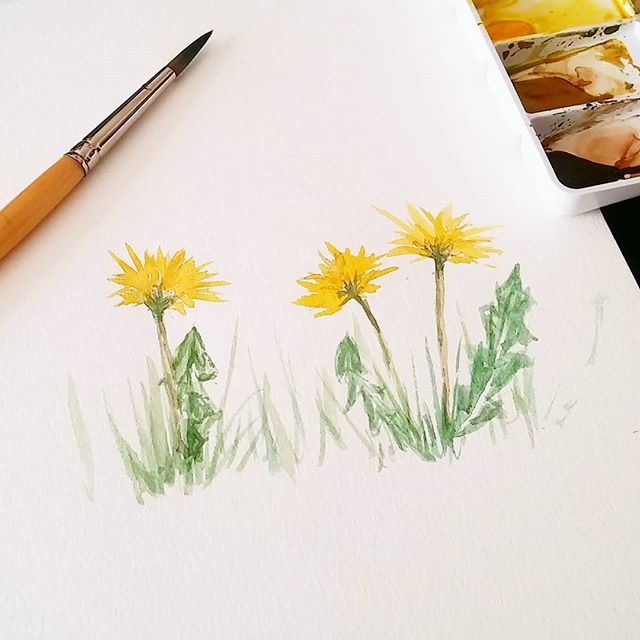 I've been sewing up a storm and my art practice is feeling neglected.. Here's a quick watercolor sketch I did this morning of some dandelions in the park. #smpsketchbook17 . #dandelion #watercolor #sketchbook #floralpainting #watercolorstudy
