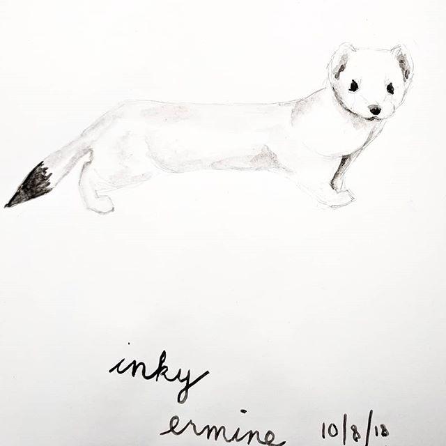 Inky ermine #inktober . . . #inktober2018 #illustratorsoninstagram #animalillustration