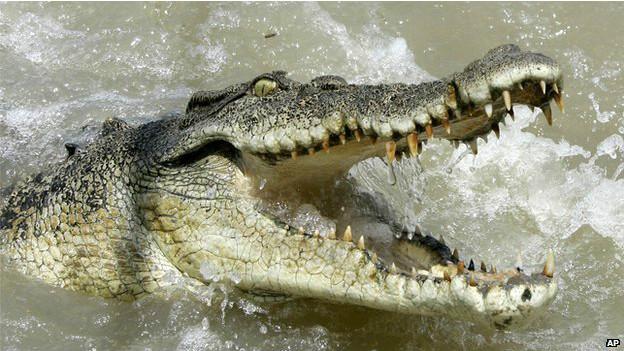 El animal medía más de 4,5 metros de largo.