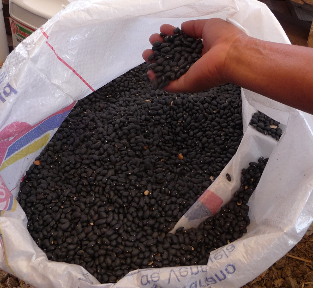granos de caraotas negras