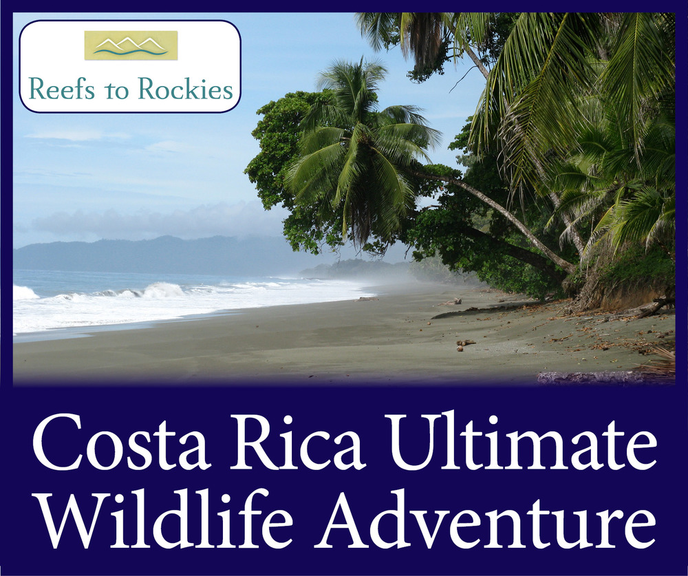 StW Costa Rica Wildlife Adventure.jpg