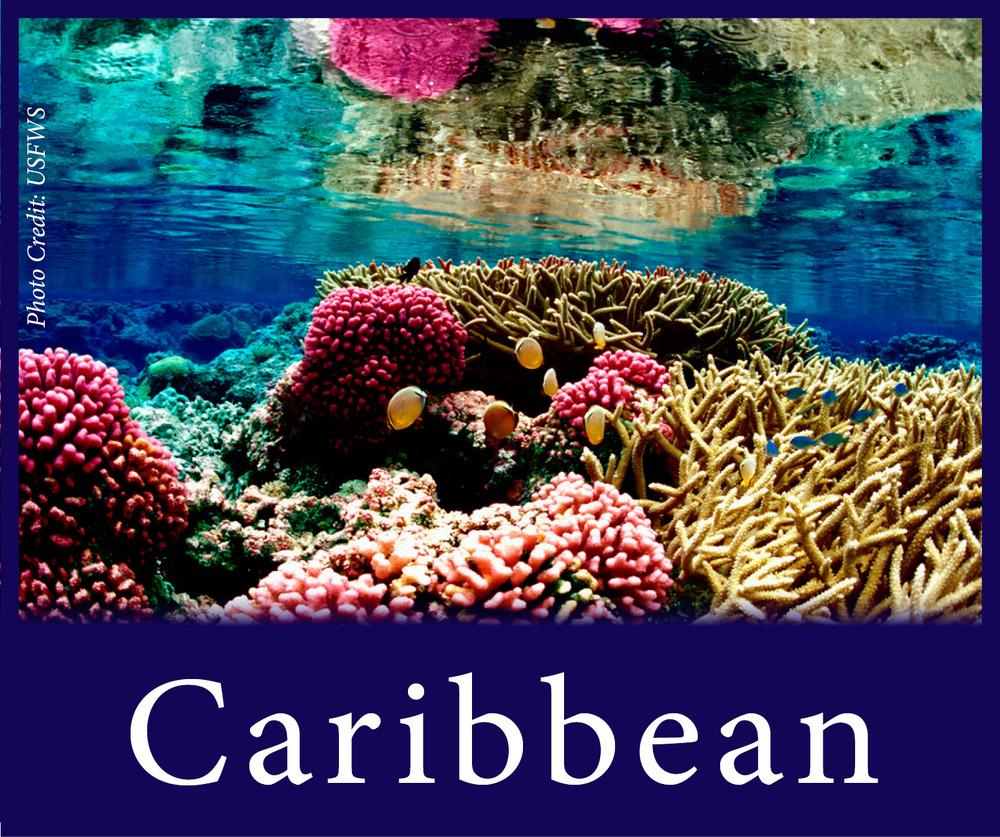 StW Caribbean.jpg