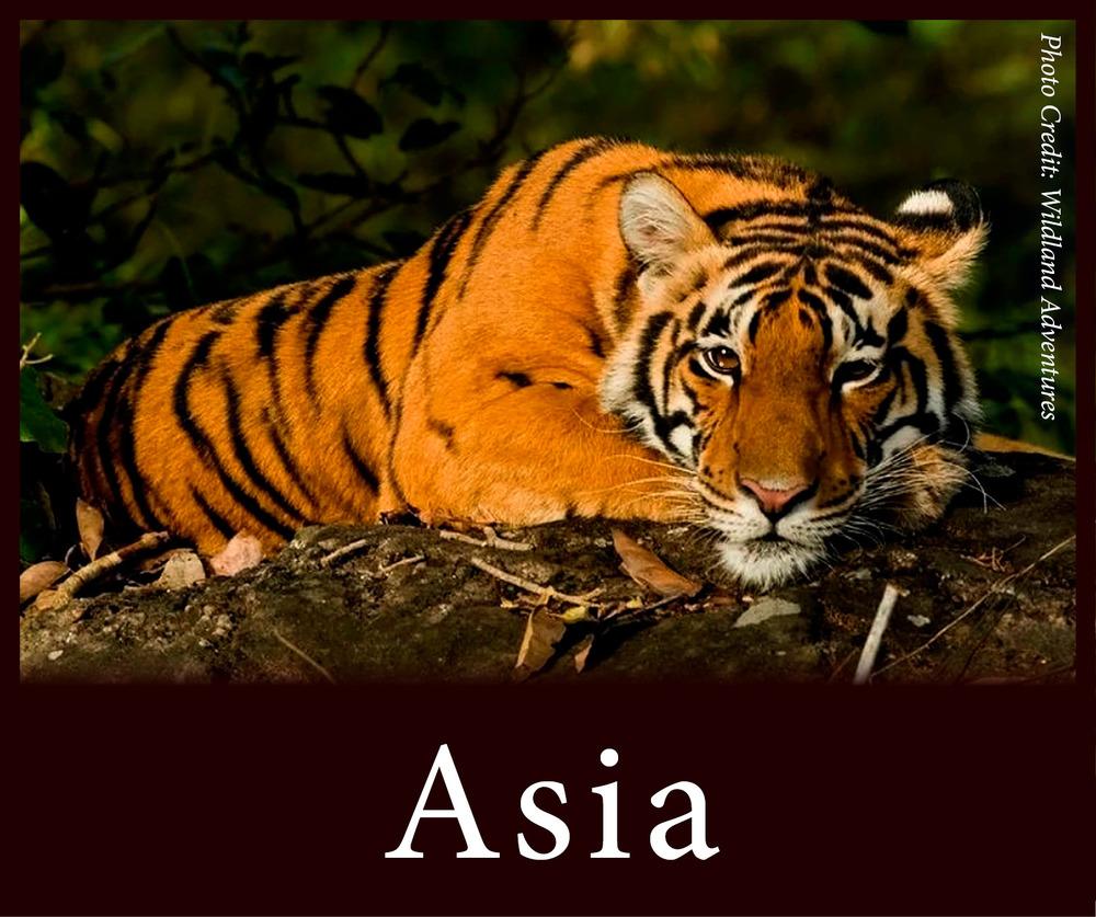 StW Asia.jpg